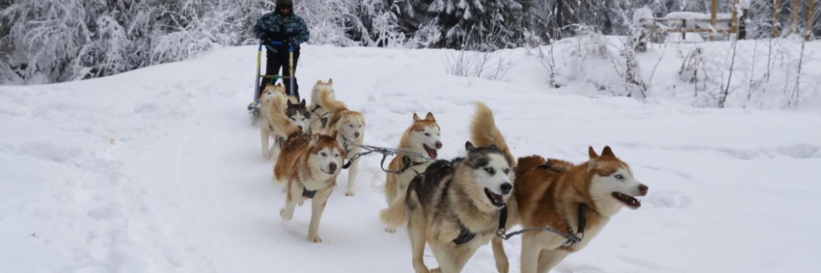поездка на собачьих упряжках