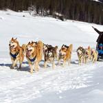 катание на собачьих упряжках